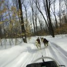 Dogsledding at Station Duchesnay