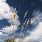 Grassy Skies