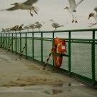 Pretty Gulls all in a line