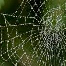 Pearl Web