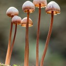 Backlit Fungi