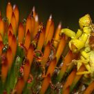 Playground of an Ambush Bug