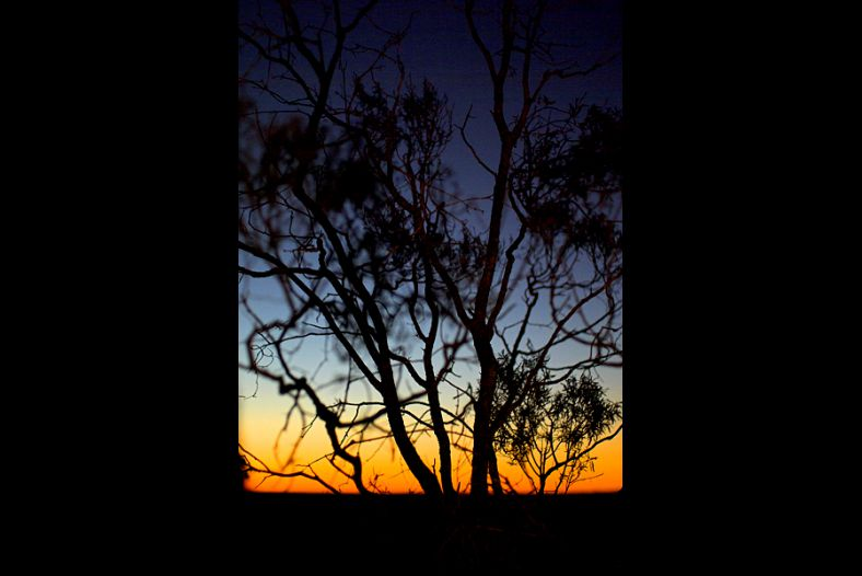 Lightning Ridge Sunset and Tree