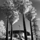 Palms Convention IR