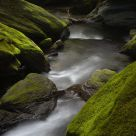 Mossy Morning Stream