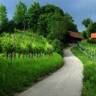 Vineyards & cottages