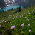 Alpine Lake and purple Fleabane