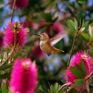 A Hummingbird's World