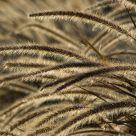Glittering Grass