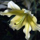 Flower Image #4