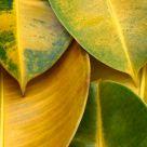 Bodegón de hojas