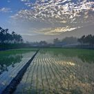 The reflection on the rice field