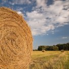 Of straw and man