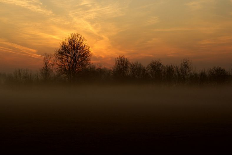 Foggy dawn