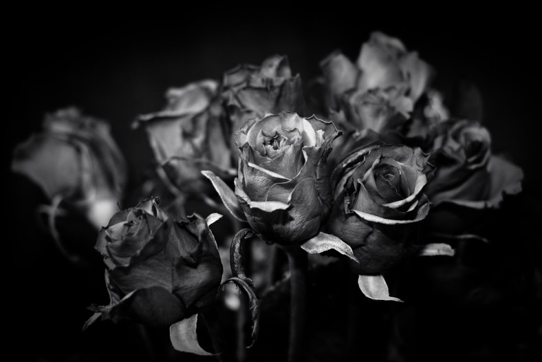 Steel Roses