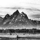 Teton Horses