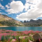 In bloom cloudy Lake