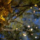 Autumnal Reflection II