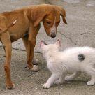 Skinny Dog And White Cat