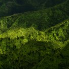 Green hills of Kaua'i IV
