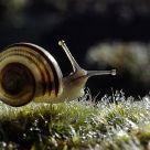 Baby Snail Contre Jour