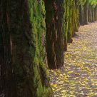 Mossy Row at Autumn