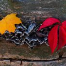 Leaves on the log