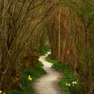 The Winding Path