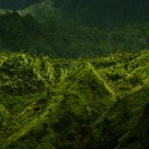 Green hills of Kaua'i V