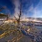 Mammoth Hot Springs - Catching Rays