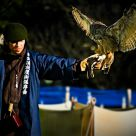Takagari - Japanese Falconry