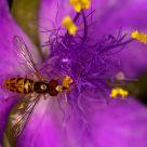 Nectaring II