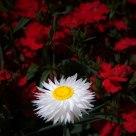 White sunshine