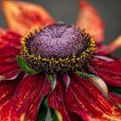 Flower #385
