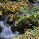 A small waterfall in autumn