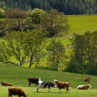 Milk country