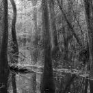 black and white swamp