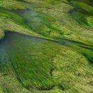 Green spaghetti river