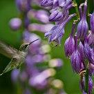 Nectar Ahead