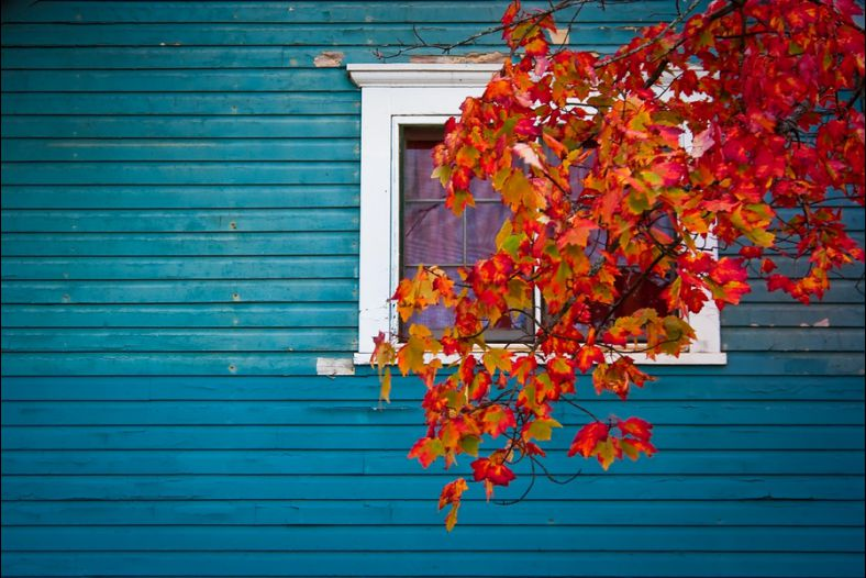 Cottage Color