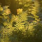 Fern in the wood