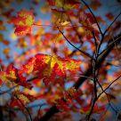 Les dernières feuilles d'automne.