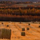 Prairie Harvest Sunset