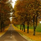 Autum Way