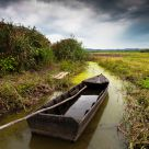 Boat in the swamp