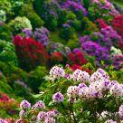 Flowering 4