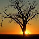 Sunset Hunt