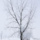 Hoar Frost on Trees #2