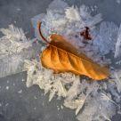 Autumns Last Stand