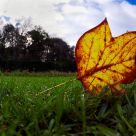 Autumn color splash